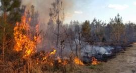 Nieustanne pożary traw w powiecie otwockim